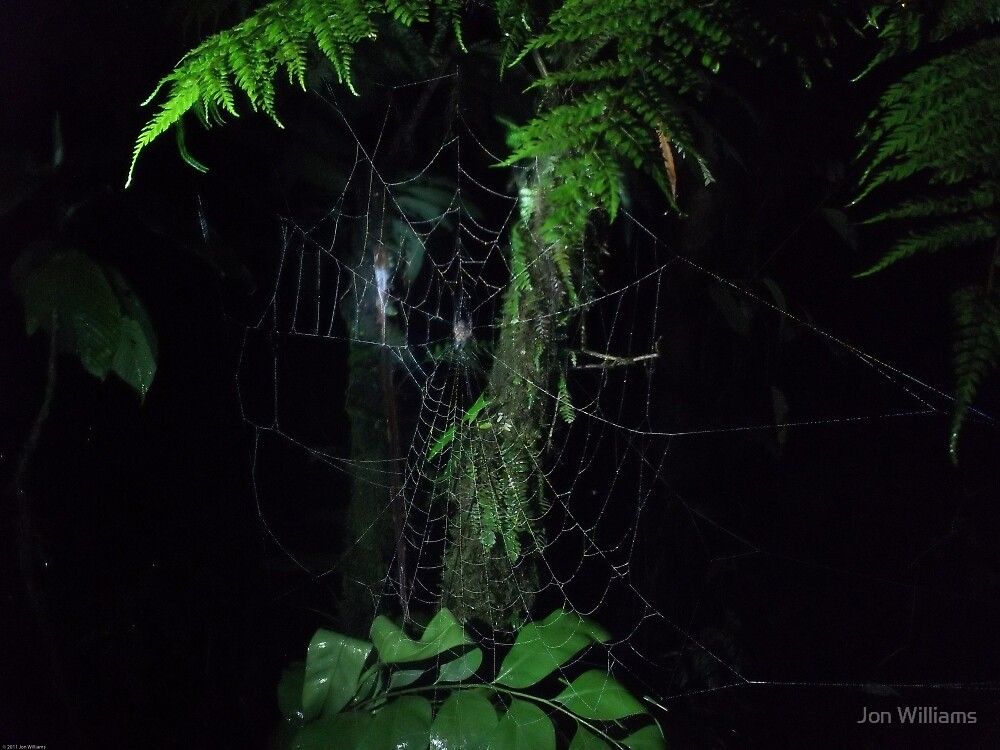 Spider's Web In Damp Darkness by JonW