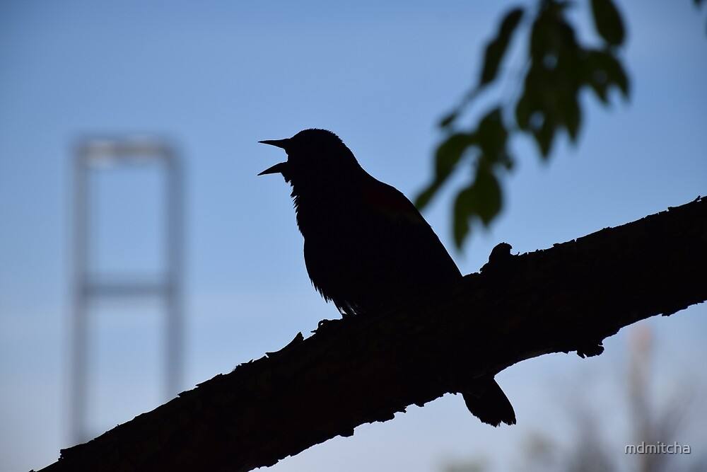 Silhouette of a bird by Mitali Dalwalla