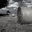 Harvest at Shotton, Co. Durham by Paul Berry