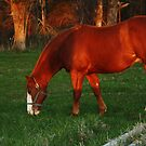 Grazing by Susan Blevins
