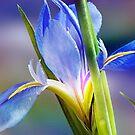 Fleur de Lis by Bonnie T.  Barry