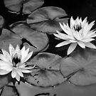 Going Steady - Black and White Interpretation by Igor Shrayer