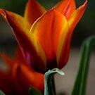 Spring in Colorado by Kasey Cline