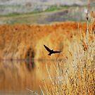 Taking flight by MandaP