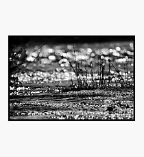 In The River Photographic Print