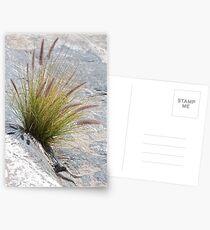 Grasses Postcards