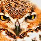 Owl Be Seeing You by shutterbug2010