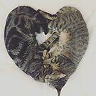 Kitten Love by NEmens