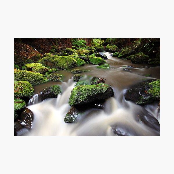 Verdant Stream, Otways, Great Ocean Road, Australia Photographic Print