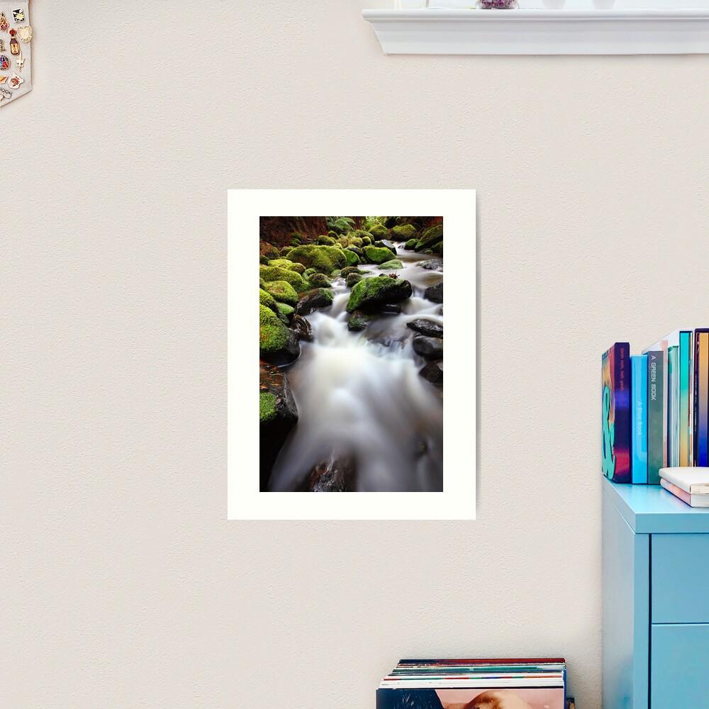 Verdant Stream, Otways, Great Ocean Road, Australia Art Print