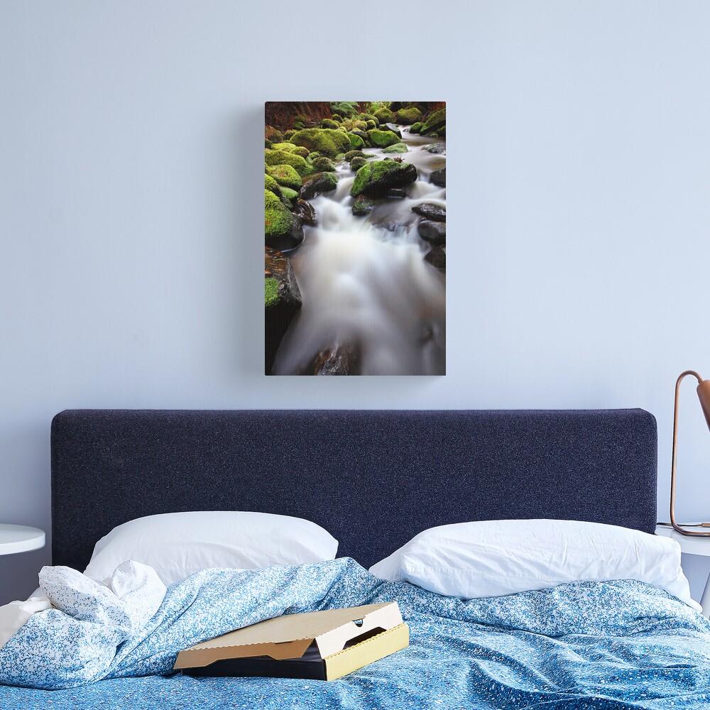 Verdant Stream, Otways, Great Ocean Road, Australia Canvas Print