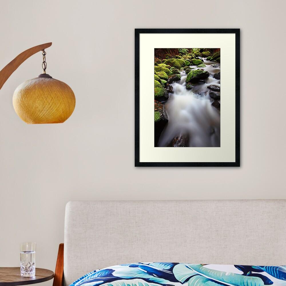 Verdant Stream, Otways, Great Ocean Road, Australia Framed Art Print