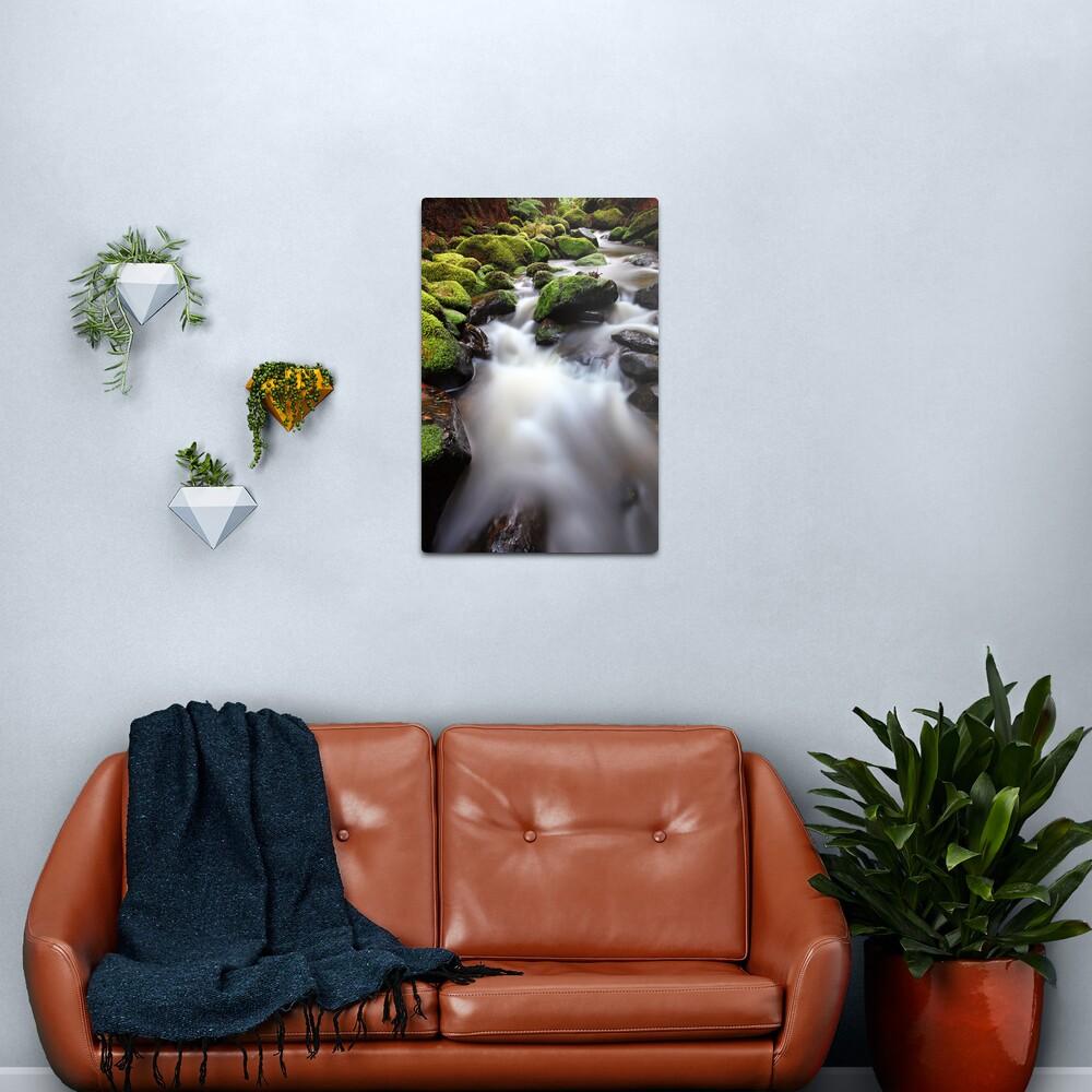 Verdant Stream, Otways, Great Ocean Road, Australia Metal Print