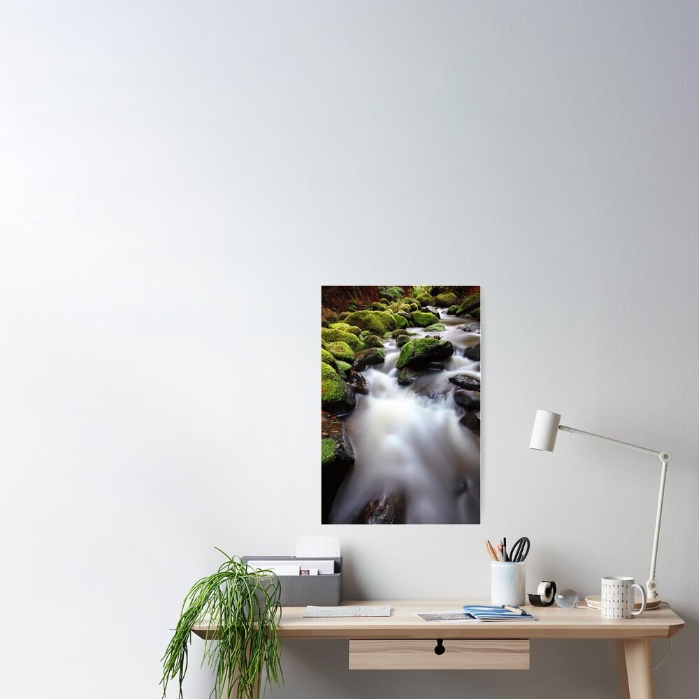 Verdant Stream, Otways, Great Ocean Road, Australia Poster