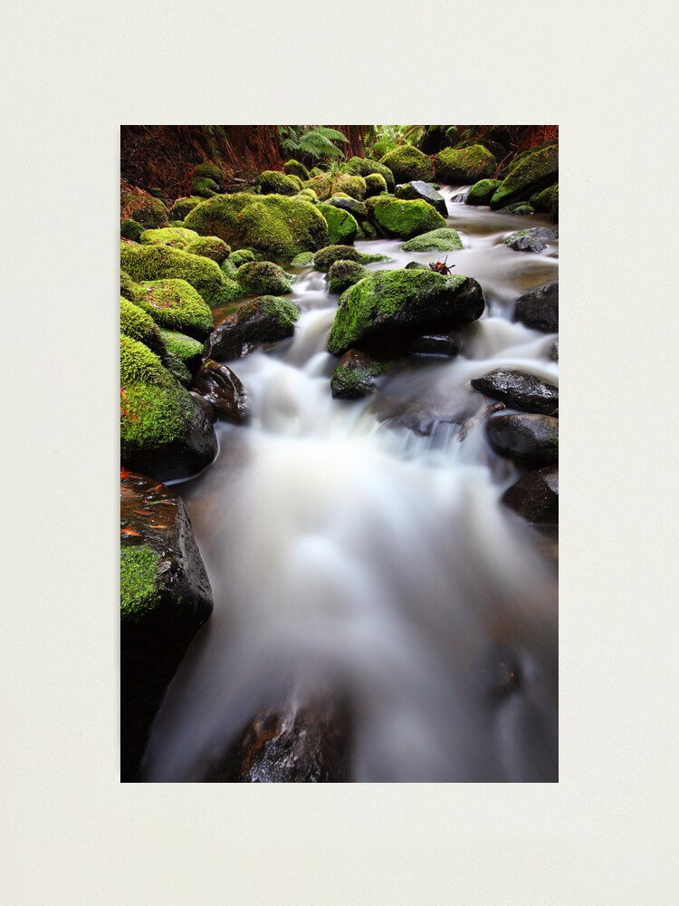 Alternate view of Verdant Stream, Otways, Great Ocean Road, Australia Photographic Print
