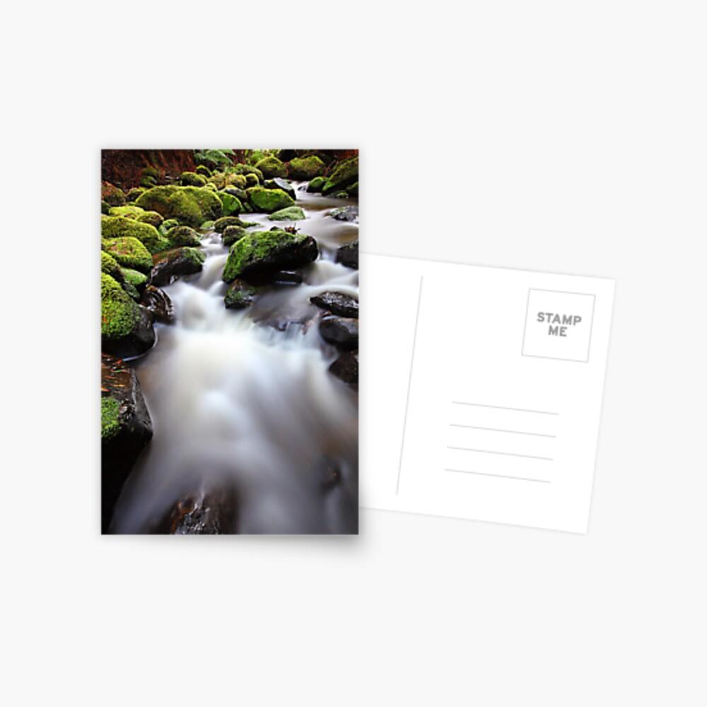 Verdant Stream, Otways, Great Ocean Road, Australia Postcard