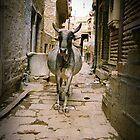 Sacred Cow by livia