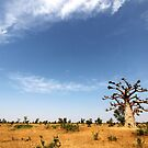 Baobab Tree and Blue Skies by helenlloyd