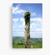 Nature always win ! Canvas Print