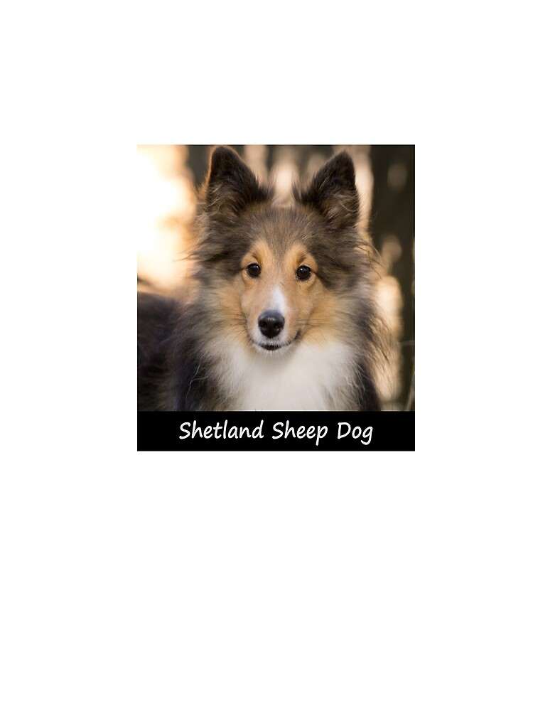 Shetland Sheep Dog by Fjfichman