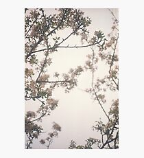 Faded blossom Photographic Print