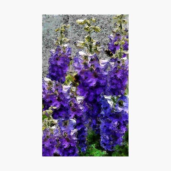 Delphiniums blue Photographic Print