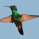 Hummingbird at Flight by MaluC