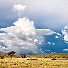 Damaraland by Olwen Evans