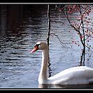SWAN LAKE by BOLLA67