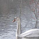 SWAN LAKE SKETCH by BOLLA67