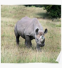 Rhinocerous 9 Poster