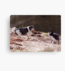 Shake It All About Canvas Print