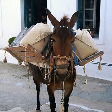 The little donkey of Amorgos, Cyclades by DesignByLGA