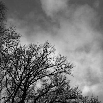 Winterhimmel von DeniseAbe