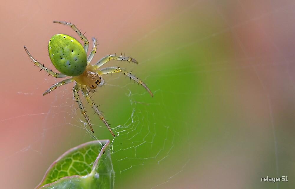 Araniella cucurbitina by relayer51