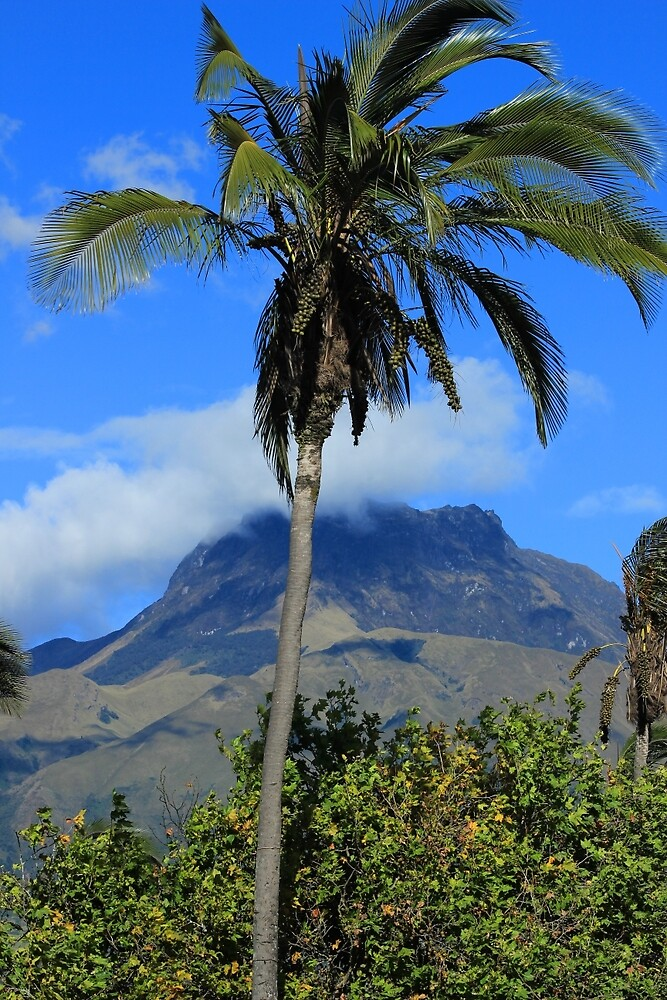 Palm Tree and Mount Imbabura by rhamm