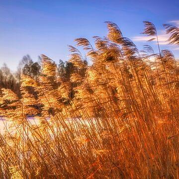 Winter Morning Light 4 by wekegene