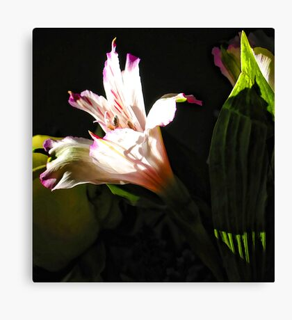 Birthday Bouquet - Peruvian Lilly in th Afternoon Sun  Canvas Print