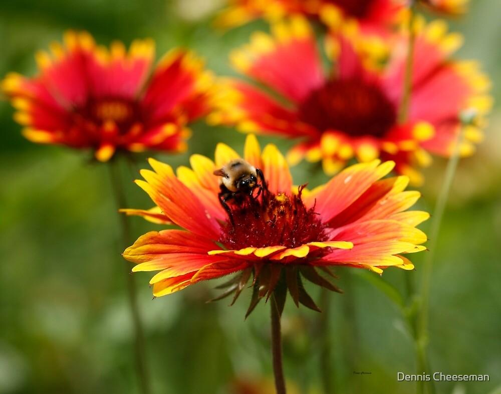 The Pollinator  by Dennis Cheeseman