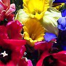 Frühlingsblumen, Frühjahr von rhnaturestyles
