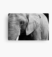 Old Gray Canvas Print