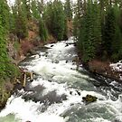 Benham Falls ~ Deschutes National Forest ~ Bend, Oregon by Kimberly Chadwick