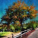 My Favorite Tree by Barbara Manis
