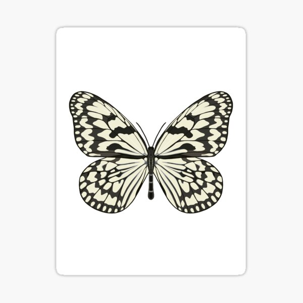 Marble White Butterfly Sticker