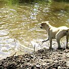 Super Cooper, Rescue Dog - Part4 by PhoenixArt