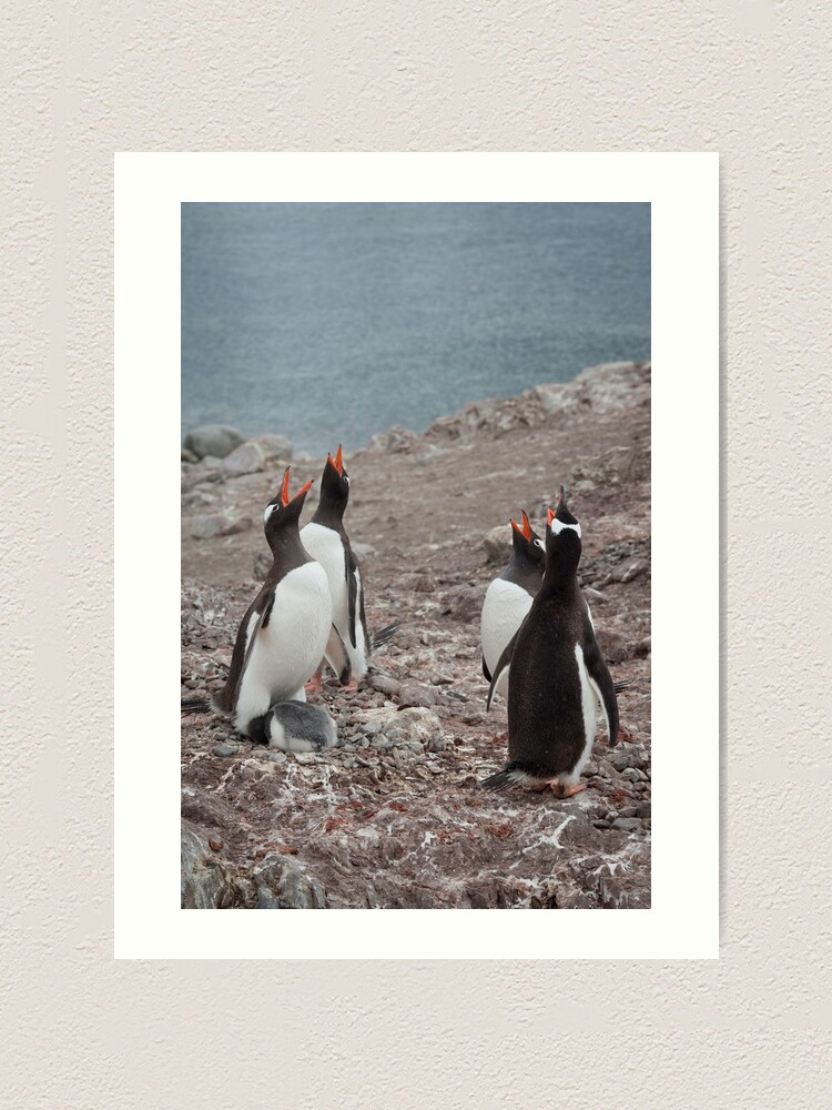 Alternate view of Gentoo Chorus Art Print