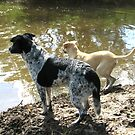 Super Cooper, Rescue Dog - Part2 by PhoenixArt