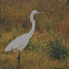 Delightful Egret by Nancy Stafford