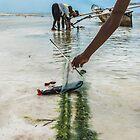 Flip Flop Boat Races by Valerie Rosen