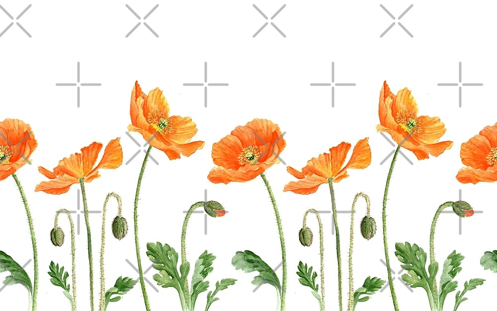 Watercolor poppies by Alena Tselesh